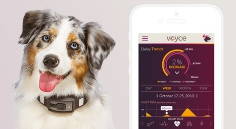 Wearable tech for dogs tells owners how they're feeling | Research for Design Sydney | Scoop.it