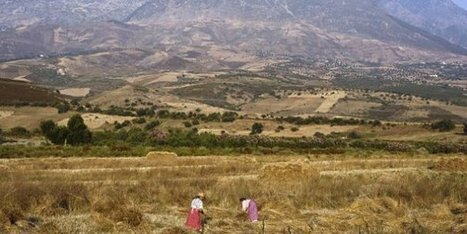 Le Maroc lance un plan d'urgence contre la sécheresse - JeuneAfrique.com | Agriculture et Alimentation méditerranéenne durable | Scoop.it