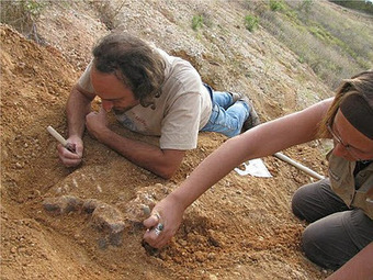 Human evolution 'could have happened outside Africa too', claim scientists | Aux origines | Scoop.it