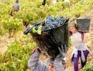 There's a global wine shortage | Food History & New Markets | Scoop.it