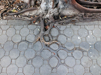 Adaptive Roots in the Concrete Jungle | Geography Education | Scoop.it