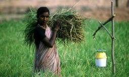 Presentan estadísticas de género y seguridad alimentaria - Al Momento Noticias | Un poco del mundo para Colombia | Scoop.it
