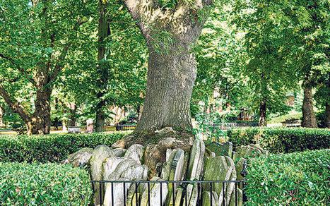 Ash dieback disease: a lament for a lost landscape - Telegraph | 100 Acre Wood | Scoop.it