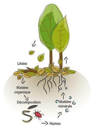 L'agriculture de conservation ou agriculture écologiquement intensive ~ Agriculture Moderne | Agriculture de Conservation des Sols | Scoop.it