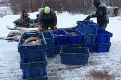 New plant to expand fishing industry in northwest Saskatchewan - Globalnews.ca | Aquaculture Directory | Scoop.it