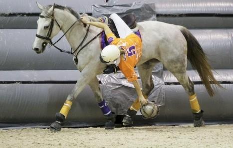 Ecuries du pato : premier entrainement. chap 4   horse ball   Scoop.it