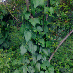 Agroforestry: The Art of Farming With Trees | Sustain Our Earth | Scoop.it