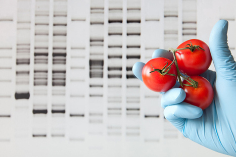 GMOs: A Breakthrough or Breakdown in U.S. Agriculture? | Food & Health 311 | Scoop.it
