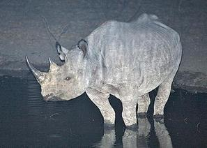 Poachers Kill Three of Malawi's Rare Black Rhinos | What's Happening to Africa's Rhino? | Scoop.it