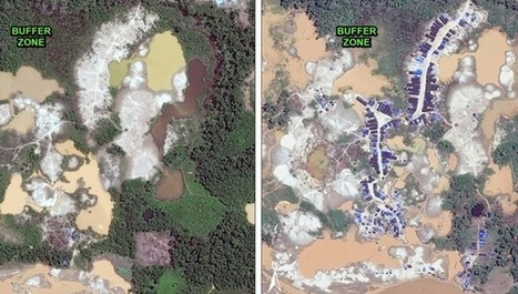 Gold mining ramps up, pushes deeper into Peruvian Amazon rainforest | Rainforest EXPLORER:  News & Notes | Scoop.it
