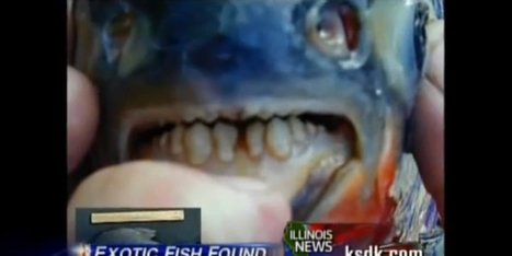 Large 'Testicle-Eating Fish' Found In NJ! | Xposed | Scoop.it