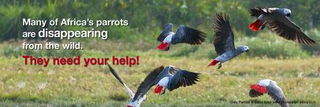 World Parrot Trust: Save Africa's Parrots | parrots | Scoop.it