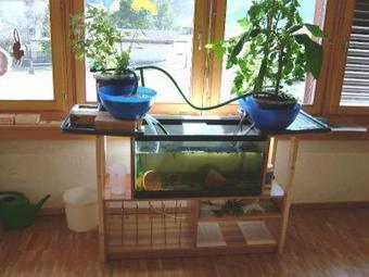Sustainable Urban Farming, Permaponics = Aquaponic Approach to ... | Urban Aquaponics | Scoop.it
