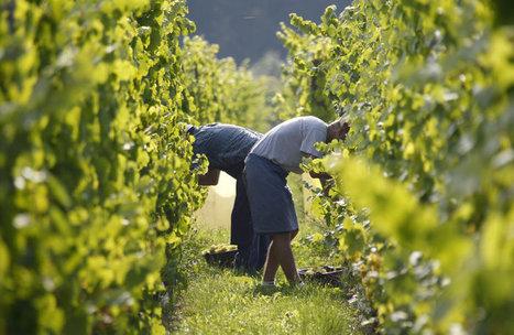 Tumeurs des agriculteurs: les pesticides en cause | Toxique, soyons vigilant ! | Scoop.it