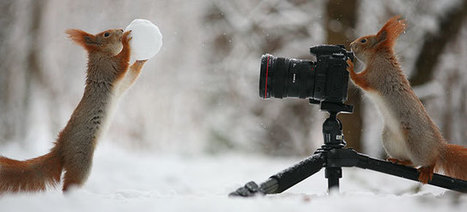 Russian Photographer Takes Pictures Of Squirrels Going NUTS In The Snow | 16s3d: Bestioles, opinions & pétitions | Scoop.it