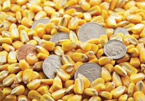 Futures File: Corn, soybean, pork prices all struggling | Grain du Coteau : News ( corn maize ethanol DDG soybean soymeal wheat livestock beef pigs canadian dollar) | Scoop.it