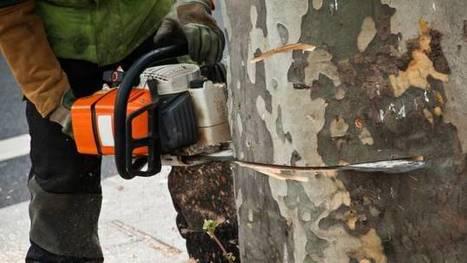 Vendée : 31 arbres abattus illégalement pour laisser passer un convoi exceptionnel | Se former pour inventer le futur | Scoop.it