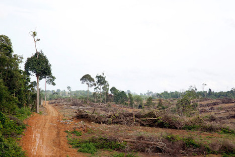 Probe confirms Singapore-based palm oil company engaged in land-grabbing in Borneo | Free, Prior and Informed Consent | Scoop.it