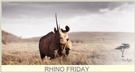 Rhino Friday Why Conviction Rates for Wildlife Crimes are so Low | Rhino | Scoop.it