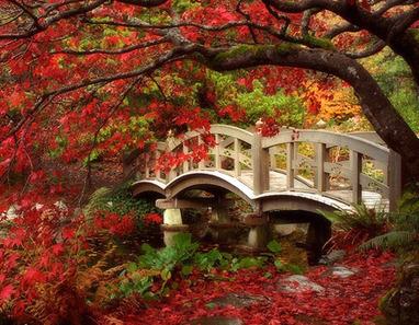 japanese garden, british columbia | A Love of Japanese Gardens | Scoop.it