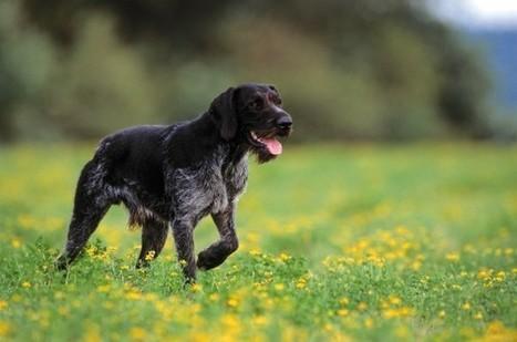 Dogs Sense Earth's Magnetic Field – News Watch   Pets   Scoop.it