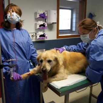 La Meuse ⎥Liège: l'Université recherche des chiens donneurs de sang !   L'actualité de l'Université de Liège (ULg)   Scoop.it