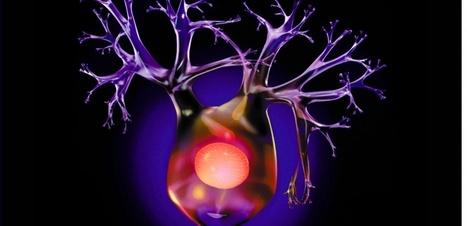6 règles d'or pour que votre cerveau continue à fabriquer de nouveaux neurones   Scientific news   Scoop.it
