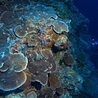 Great Barrier Reef dumping and dredging