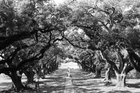 Oak Alley Plantation St James Parish Louisiana by... | Oak Alley Plantation: Things to see! | Scoop.it