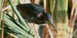 Everglades Geology - Everglades National Park | Everglades Tour Guide | Scoop.it
