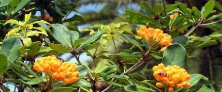 Soins intensifs pour plantes rares - Les Nouvelles Calédoniennes | Biodiversité NC | Scoop.it