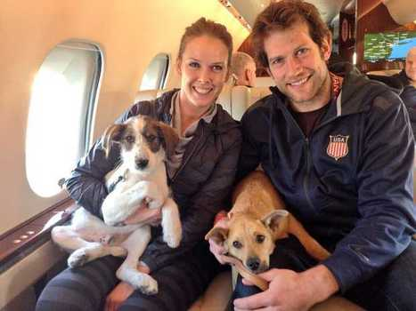 Winning the Gold in Stray Rescue | Public Relations for Non-Profits | Scoop.it