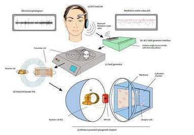 Contrôler les gènes par la pensée, c'est possible ! | telekinesis | Scoop.it
