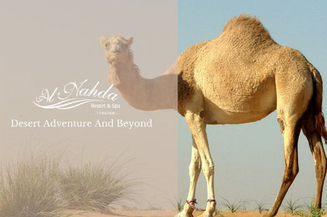 Adventure At Its Best With Camel Racing in Oman   Hotels   Resorts   Restaurants   Scoop.it