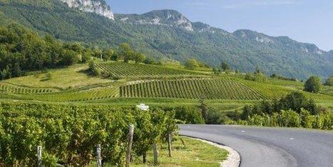 Vins: le vignoble de Savoie poursuit sa mutation - Acteurs de l'économie   IRWT - Vins de Savoie & du Bugey   Scoop.it