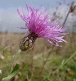 Invasive Plants: Climate Is a Determining Factor | Plant Pests - Global Travellers | Scoop.it