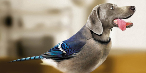 Dog Plus Bird Equals Dird | All Things Dog | Scoop.it
