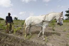 Le premier vin produit au Sénégal | Le Vin et + encore | Scoop.it