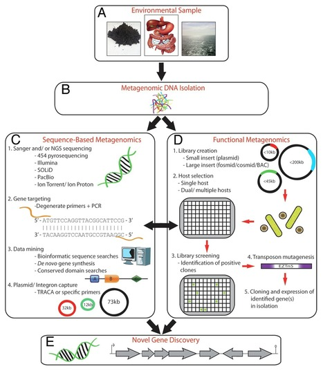 Metagenomics and novel gene discovery: Promise and potential for novel therapeutics | Functional Metagenomics | Scoop.it
