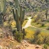 St Chad's Hot Desert A-level