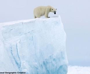 Save America's Great Arctic Wilderness   GarryRogers Biosphere News   Scoop.it