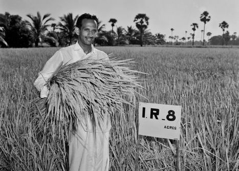 IR8: The miracle rice which saved millions of lives - BBC News | IB Geography @NIST | Scoop.it