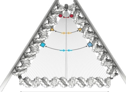 Nanoscale rotor with gripper pushes DNA origami to new heights | Amazing Science | Scoop.it