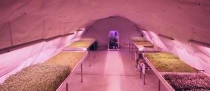 Insolite, une ferme souterraine, sous les pieds des Londoniens - Wikiagri   culture hors-sol   Scoop.it