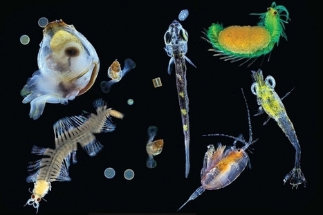 Uncovering diversity in an invisible ocean world | Amazing Science | Scoop.it
