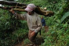 3 Signs of Progress in Curbing the Illegal Wood Trade | WRI Insights | Sustain Our Earth | Scoop.it