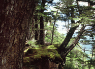 Forest Plants | Ecosystems | Scoop.it
