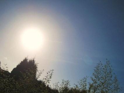 Du soleil sur les jardins du Hainaut ce lundi 28 janvier | Côté Jardin | Scoop.it