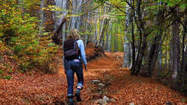 Why is walking in the woods so good for you? | Psychology Professionals | Scoop.it