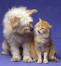 Cats and Dogs - Living Together | cats & dogs! | Scoop.it
